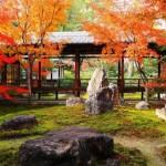 バイキングで紹介!紅葉シーズン秋の京都で1番高いグルメと最高級お土産!